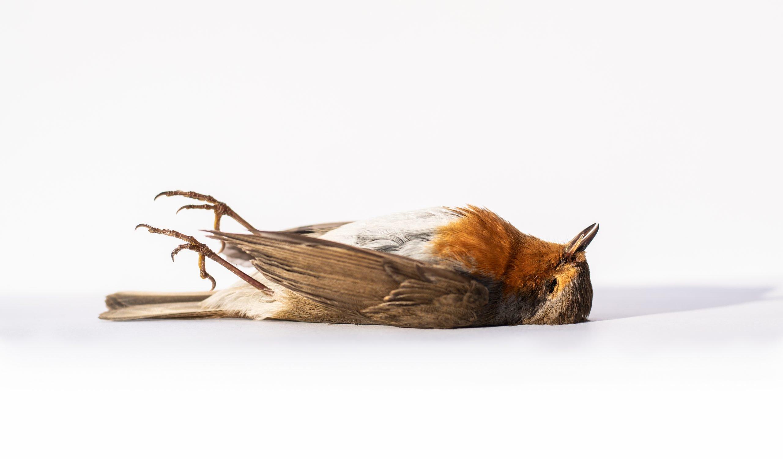 Read more about the article Come comunicare quando ci scappa il morto, e le cose si mettono male per davvero.